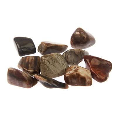 Stone of the Season - Petrified Wood
