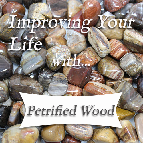 PETRIFIED WOOD 💎 TOP 4 Crystal Healing Benefits of Petrified Wood! | Stone of Wisdom — Reiki Gem Wellness